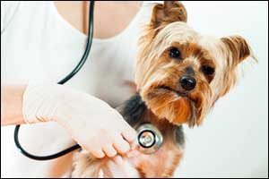 Veterinary Check-Up in Dartmouth