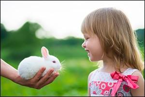 adopt-a-bunny