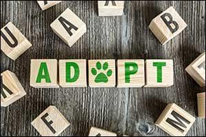 Adopt a Pet in Massachusetts