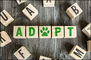 Adopt a Pet in Massachusetts