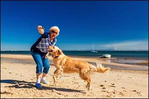 Adopting Senior Pets from Local Shelters