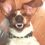 Advanced Dentistry for Pets: Veterinary Dental Services in MA