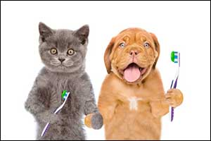 Advanced Dentistry for New Bedford Pets
