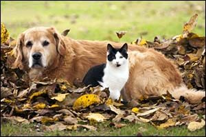 Pet Ownership in Autumn