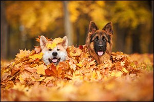 autumn-pet-tips