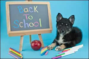 Back to School for Pets in Southeastern Massachusetts
