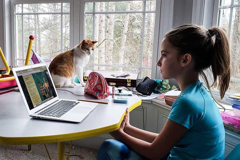 Pet Care in Southeastern Massachusetts