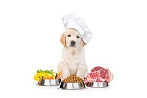 Best Dog Food in Westport, MA