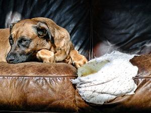 canine-behavior-problems