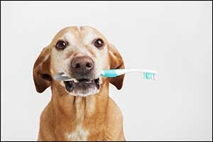 canine dental care in dartmouth