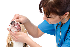 canine-dental-care
