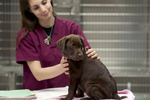 Canine Influenza Virus - Anchor Animal Hospital, Dartmouth, MA