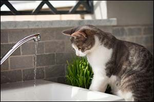 Pet Care Tips for Cats
