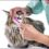 Take Care of Your Pet's Teeth: Dartmouth Dental Care for Pets