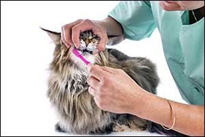 veterinary dental care for pets in Dartmouth