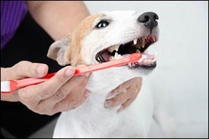 dental-health