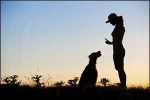 Dog Training New Bedford