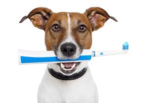 doggy-dental-treats