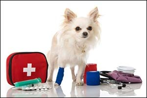 Emergency Vet Services