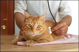 Emergency Vet Visits in Dartmouth