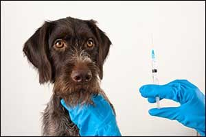 essential veterinary vaccinations