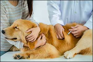 Massachusetts Vaccinations for Pets
