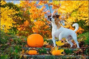 Fall Pet Tips - Vet Care in Dartmouth, MA