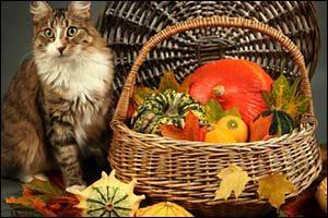 Pets and Fall Holidays