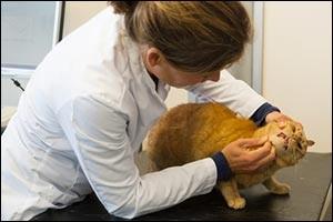 feline-dental-care