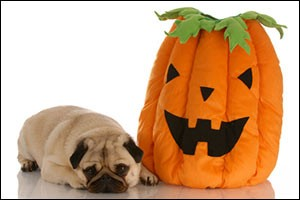 halloween-safety-pets
