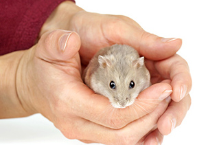 Proper Care Guide for Hamsters – Anchor Animal Hospital