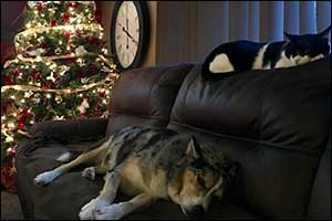 holiday pet tips new bedford