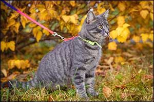 Indoor and Outdoor Cats in Southeastern Massachusetts