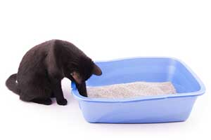 Litter Box Training Tips for South Coast Cats