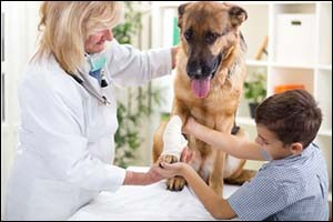 Emergency Vet Services in Dartmouth