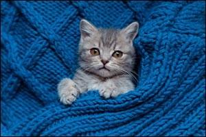 new-kitten-care