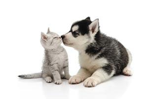 new-pet-care