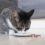 Nutritional Needs of Pets: Best Southcoast Veterinary Advice