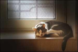 Outdoor Cats Indoors In Westport