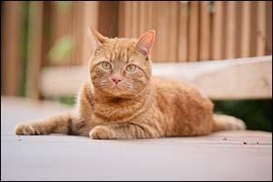 Outdoor vs Indoor Cats