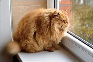 seasonal pet tips for overweight cats
