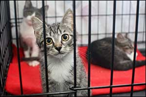 pet adoption in New Bedford