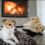 Pet Fire Safety Tips: Keep Pets Safe From Fire in Southcoast