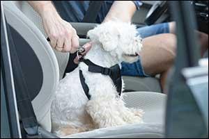 pet safety gear in southeastern massachusetts