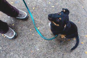 Pet Training Programs in Westport, MA