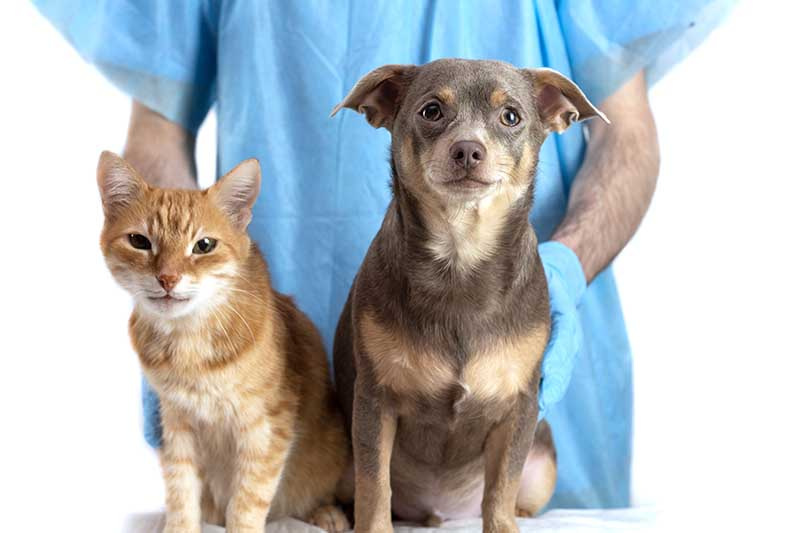 MA pet vaccination requirements