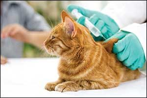 pet vaccines in Massachusetts and Rhode Island