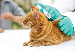 pet vaccines in Massachusetts and Rhode Island