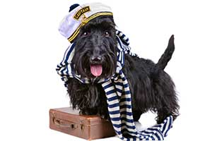 prepare pet for boarding in dartmouth