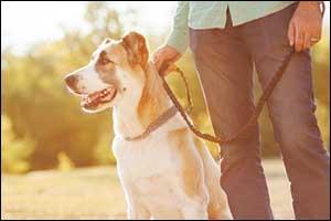 Prevent Dog Fights in Southeastern Massachusetts